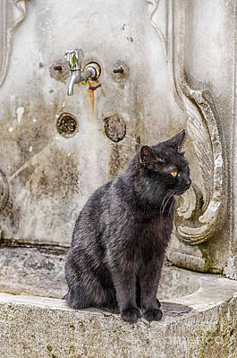 Homeless Pets Photograph - Ablution Taps Kitty by Antony McAulay
