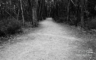 Photograph - Aboriginal Path Bw by Tim Richards