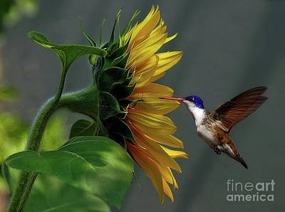 Photograph - Nectar With Insect by John Kolenberg