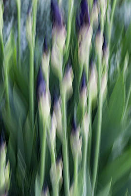Photograph - About To Bloom by Deborah Hughes