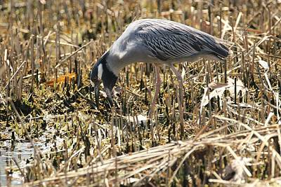 Photograph - About To Grab Some Food by Karen Silvestri