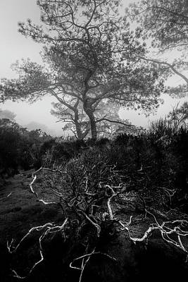 Tree Roots Photograph - Above And Below by Joseph Smith