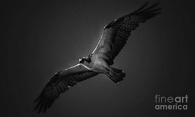Photograph - Above by Frank Williams