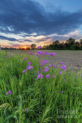 Prairie Sunset Wall Art - Photograph - Above It All by Andrew Slater
