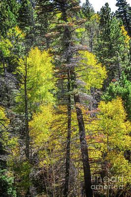 Photograph - Above Taos by Susan Warren