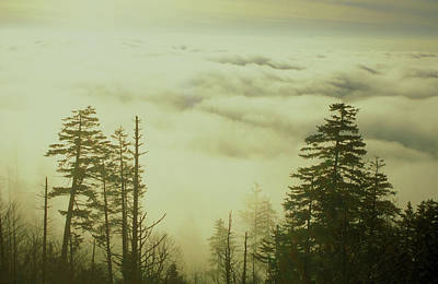 Photograph - Above The Clouds Clingmans Dome by John Burk