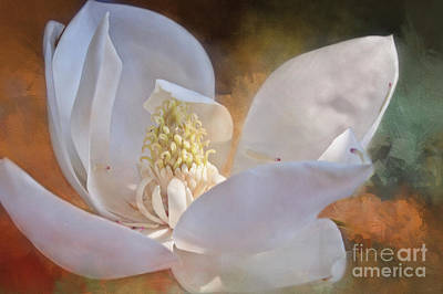 Photograph - Above The Darkness- Magnolia Collection 3 by Janie Johnson