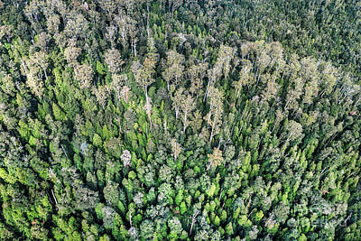 Photograph - Above The Treetops by Evelina Kremsdorf