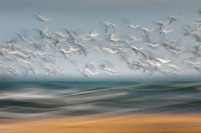 Photograph - Above The Waves by John Whitmarsh