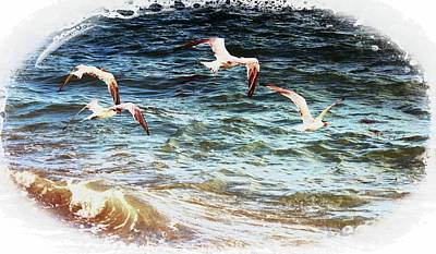 Photograph - Above The Waves by Sheri McLeroy