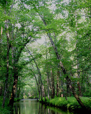 Photograph - Abrams Creek by Kevin Myers