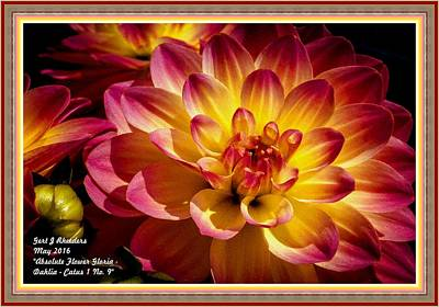 The Blue Dahlia Painting - Absolute Flower Gloria - Dahlia Catus 1 No. 9 L A With Decorative Ornate Printed Frame. by Gert J Rheeders
