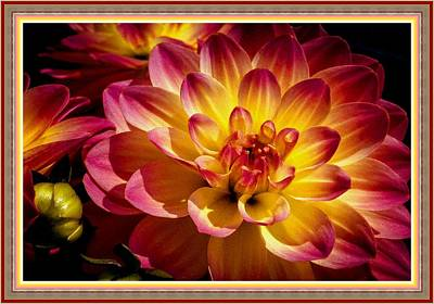 The Blue Dahlia Painting - Absolute Flower Gloria - Dahlia Catus 1 No. 9 L B With Decorative Ornate Printed Frame. by Gert J Rheeders