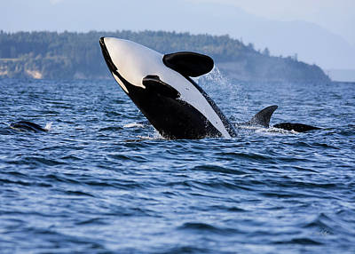 Photograph - Absolutely Free - Whale Art by Jordan Blackstone