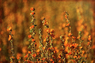 Photograph - Absolutely Orange  by Saija Lehtonen