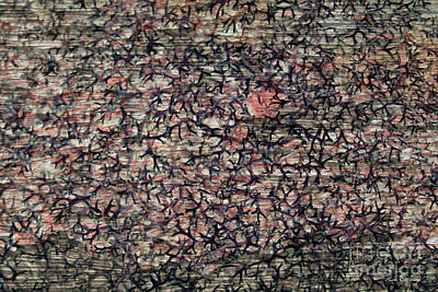 Photograph - Abstract 77 Art by Reid Callaway