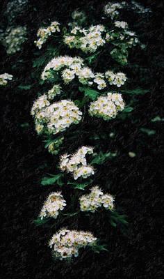 Surrealism Digital Art - Abstract Almond Flowers by Adam Asar