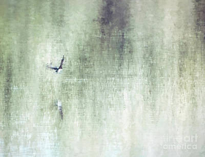 Animals Photos - Abstract Art - Peaceful Flight by Kerri Farley