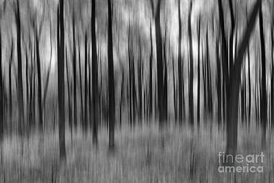 Abstract Skyline Rights Managed Images - Abstract Autumn BW Royalty-Free Image by Michael Ver Sprill