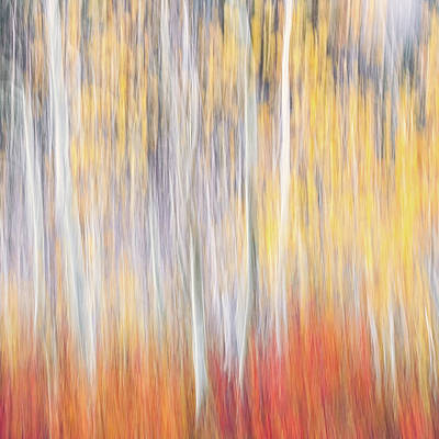 Photograph - Abstract Autumn by Laura Roberts