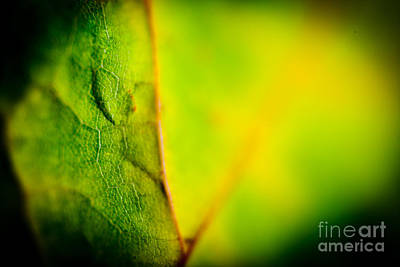 Abstract Autumn Leaves  Print by Raimond Klavins