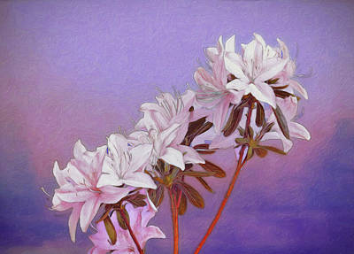 Violet Bloom Photograph - Abstract Azaleas by Tom Mc Nemar