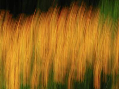 Icm Photograph - Abstract Black Eyed Susan Field by Juergen Roth