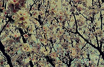 Photograph - Abstract Blossoms by Diane montana Jansson
