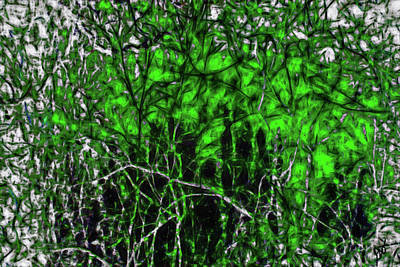 Photograph - Abstract Branches By The Bayou by Gina O'Brien