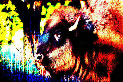 Abstract Buffalo Art Print