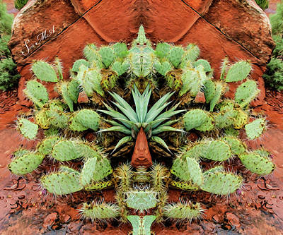 Photograph - Abstract Cactus 07-013 by Scott McAllister