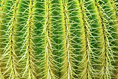 Photograph - Abstract Cactus by Delphimages Photo Creations