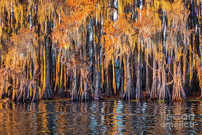 Caddo Lake Photograph - Abstract Caddo Trees by Inge Johnsson