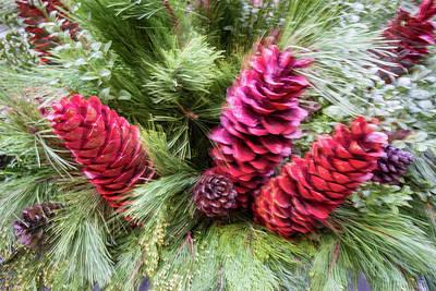 Photograph - Abstract Christmas - Colorful Pine Cone Burst by Georgia Mizuleva