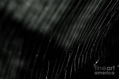 Print featuring the photograph Abstract Cobweb by Yurix Sardinelly