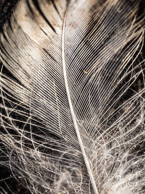 Photograph - Abstract Details Of A Feather by Ismo Raisanen