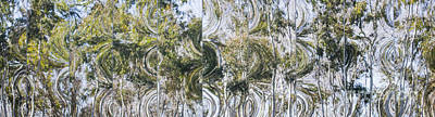 Photograph - Abstract Eucalyptus by Angela DeFrias