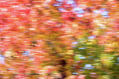 Photograph - Abstract Fall Leaves 2 by Rebecca Cozart