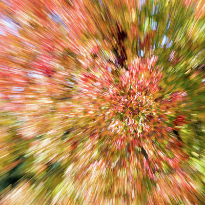Photograph - Abstract Fall Leaves 3 by Rebecca Cozart