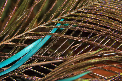 Photograph - Abstract Feather  by Angela Murdock