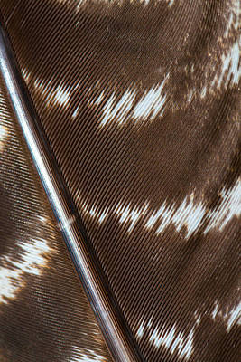 Photograph - Abstract Feather by Karol Livote