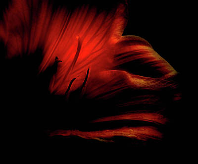 Photograph - Abstract Flower 1 by Elijah Knight