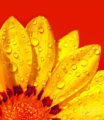 Abstract Flower Petals Art Print