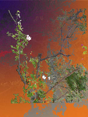 Abstract Flowers Of Light Series #13 Art Print