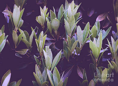 Photograph - Abstract Foliage Green And Purple by Andrea Anderegg