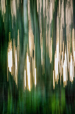 Photograph - Abstract Forest 1 by Spikey Mouse Photography