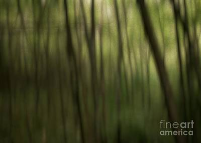 Photograph - Abstract Forest by Kenny Glotfelty