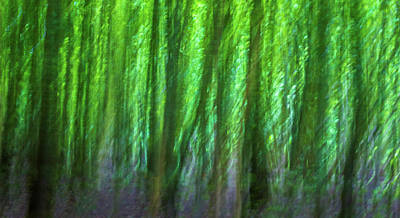 Abstract Forest Art Print by Martin Newman