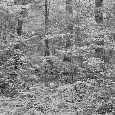 Photograph - Deep Forest by Martina Rall