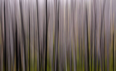 American West - Abstract Forest by Whispering Peaks Photography